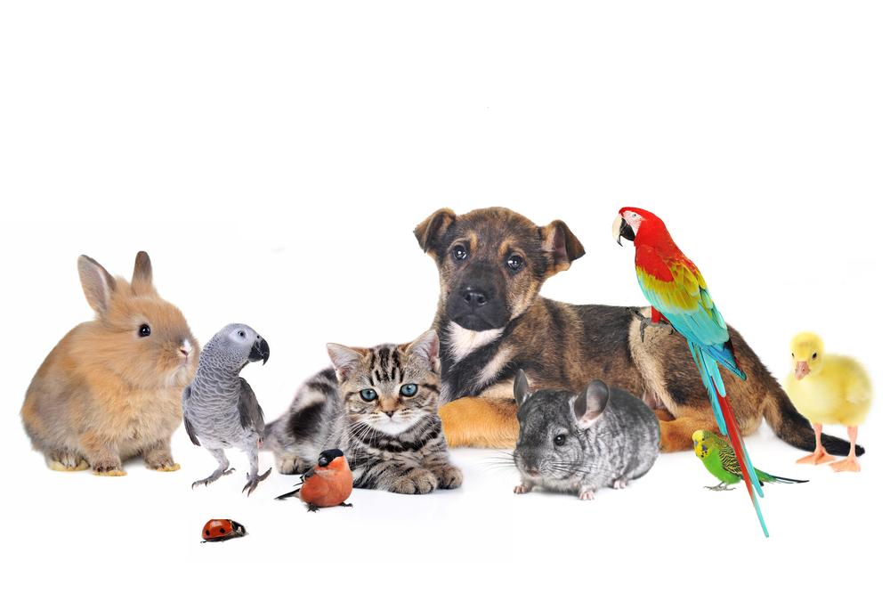 animals_374918329